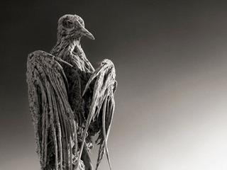 """【「石にされた動物たち」の写真―""""死のアルカリ湖""""の危険な力"""