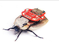 サイボーグ化されたゴキブリが新発売ー人類とゴキの類似点に着目、ともに優秀!?