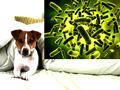 死に至ることも ペットから飼い主に感染する微生物・細菌類