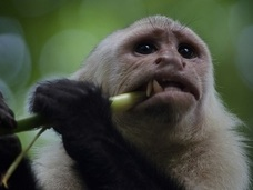サルもお金のために売春する!? 実験で明らかになった、ダメ人間とサルの悲しい共通点