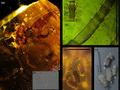 """""""ゴキブリの生命力""""に新たな伝説が刻まれる 消えた恐竜の化石が証拠!?"""
