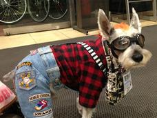 小平市の英雄犬!? ひとりでTSUTAYAにDVDを返却する、都市伝説犬・こてつ君の日常とは?