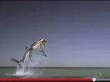 食人鮫、NYギャング… 世界のタンポンCMがブッ飛びすぎててアツい!!