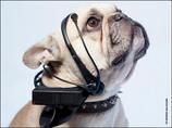 しゃべる犬!?「疲れた~」「お腹空いた~」  夢の装置は「バウリンガル」を超えられるか?