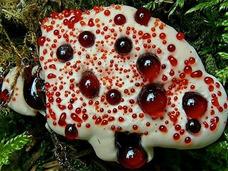 流血キノコ!? 北米の森の中に現れたおぞましい悪夢