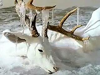 飛び跳ねた瞬間に凍結したカエル! 凍ってしまった動物たちの写真が、残酷も美しい