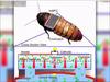 大量のゴキブリをサイボーグ化→環境汚染から人間を守らせるプランが進行中!