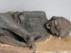 インカ時代の20代女性のミイラ、死因は宗教儀式の生け贄だった!? 500年前一体何があったのか?【最新研究報告】