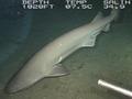 カグラザメは地震を予知するか? 日本で捕獲されたサメと地震の関係