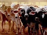 """""""考えさせられるディープ・スポット""""品川「お肉の情報館」が超リアル! ~お肉を食べる前に、もう一度知るべきこと~"""