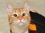 世にも珍しい「寄り目の猫」、ジャーヴィスくん! 波瀾万丈の半生とは!?