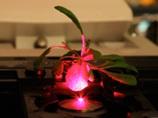 植物が化学兵器探知機に!? サイボーグ植物の誕生か?