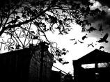 京都で尼崎事件レベルの連続不審死事件が発生中! 京都府警VS大手メディアの舞台裏