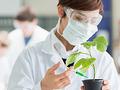 やはり植物は賢かった!!  リスクを回避しながら生きる植物の姿が研究で明らかに