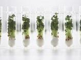 栄養価抜群の「スーパー・ベジタブル」が、人類の宇宙移住を後押し!?
