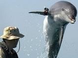 【ウクライナ危機】露、鍛えぬかれた「戦闘用イルカ」を入手! 米イルカと黒海で衝突!?