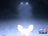 森に現れたUFO、目からビームを出す鹿…!? ビデオに写った謎の光の正体とは?