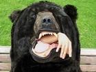 日本人アーティストが作った、巨大な「熊の寝袋」が欧米で話題! それにしてもリアルすぎる…。