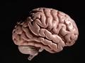 人間には無意識にウソを見抜ける能力がある!? 進化する嘘発見技術