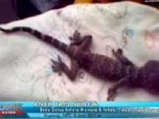 「女性がトカゲを出産」!? 衝撃のニュースに村人パニック!! インドネシア当局が調査へ