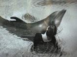 【衝撃】イルカとの性的関係を赤裸々に告白する人々!! 「足や手に体をこすりつけて……」