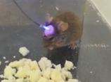 レーザー光線で記憶を消す装置!?  記憶のコントロールに成功