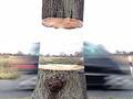 お前はもう浮いている! 木を重力から解き放つ驚愕の「INVISIBLEアート」