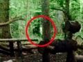 リアル「ブレア・ウィッチ・プロジェクト」 深夜の森に響き渡る謎の声と人影