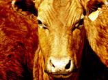 牛と獣姦、ヤギと結婚? 日本でも、人間以外との恋愛がプチブームの怪