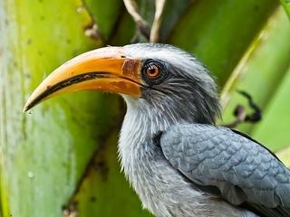 【知らないとダメ、絶滅危惧種の動植物リスト ― 守らねばならぬ大切な生命たち