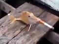 【動画】これはヤバい「喫煙魚」! ― 漁師が魚にタバコを強要、世界中で非難の嵐