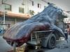 """中国のトンデモ光景! """"世界最大の絶滅危惧魚""""を運ぶ漁師の姿がスゴいことに…!"""