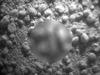 """【驚愕】火星探査機が未知の生命体の""""抜け殻""""を撮影!? NASAの「キュリオシティ」が快挙か?"""
