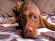 米で話題の「犬を食べることについての議論」が深く考えさせられる ― なぜ、犬はダメなのか?