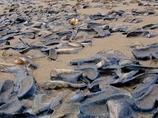 天文学的な大群! 数十億ものクラゲのような謎の生物がビーチに侵入!