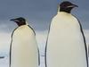 人間よりも巨大なペンギンがいた? ― 南極大陸付近の島でメガトン級の骨を発見!