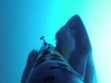 """【動画】獲物を狙う野生のホホジロザメが繰り出す""""本気度100%の必殺技""""に背筋が凍る!"""