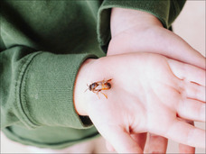 「これからはバッタが美味しい季節です」虫食いの前に知っておきたい5つのルール