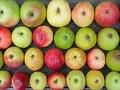 不思議! 1本の木に50品種のリンゴ!! 30年の栽培の成果を結集!