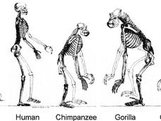 2050年までに人類はニュータイプに進化する! 赤い目を持ち、寿命は120歳になる(科学者談)