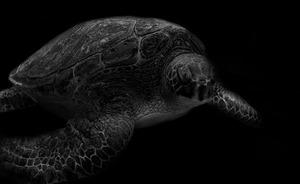 水族館の生き物は、本当に生きていると言えるか? 写真家、馬場智行が迫る「魚たちの暗闇」