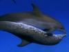アソコのサイズは超重要!! クジラから判明した驚きの研究結果