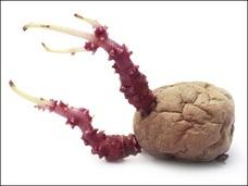 膣からジャガイモの芽が生えた!! =コロンビア