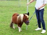 親友は犬!? 小人症の馬が可愛い過ぎる!