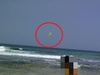 鳥? モスマン? ビーチで撮影された奇妙な黄色い生物=インドネシア