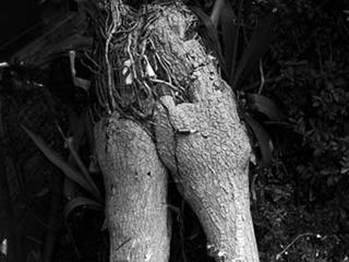 【予想以上】近所の角を曲がると、スニーカーを履いた木人が立っていた!!