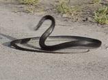 【衝撃動画】LSDを服用したヘビの踊りっぷりがキレキレだった!?