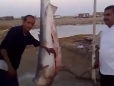 【閲覧注意】サメの腹を割いたら出てきた意外なものって?