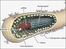 エボラ生物兵器説 ― 秘かに囁かれる驚愕の事実と大国の野望