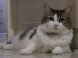人の死がわかる猫「オスカー」 〜猫と超能力〜